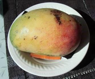 アップルマンゴー直径20㎝