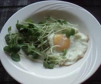 生野菜と目玉焼き