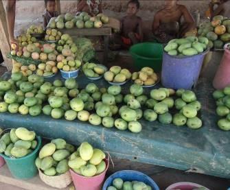 マンゴー売り場、田舎