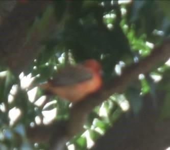 み花も実もある木にいる小鳥