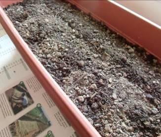 播種後の覆土