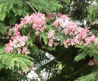 マダガスカルの花2月2