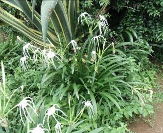 マダガスカルの花2月4