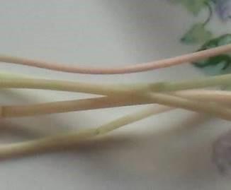 色野菜ソバの芽