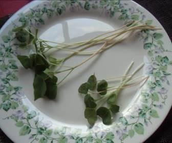 ソバの芽1週間と2週間の差