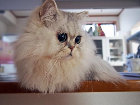 先住猫さん①2016.1.2