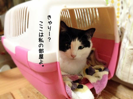 のらこ2014.2.25② 2
