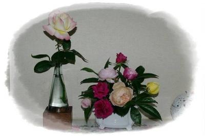 rose 014