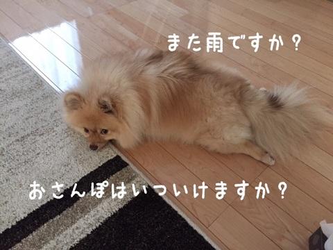 IMG_2955[1]