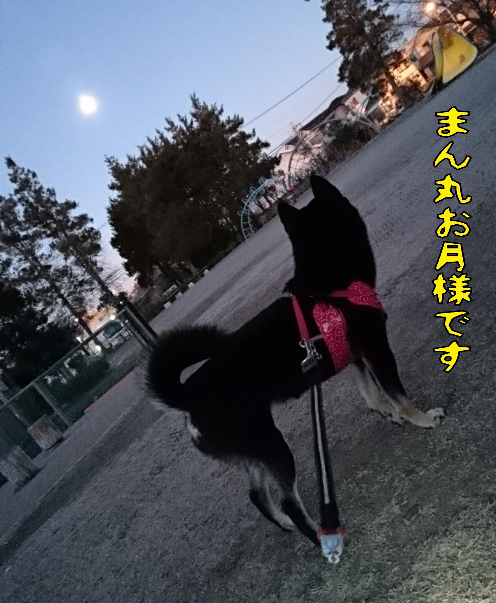 201601271908121a1.jpg