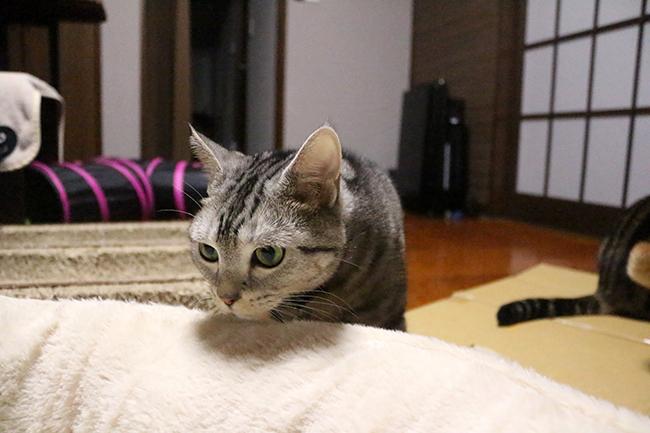 blog_000006911.jpg
