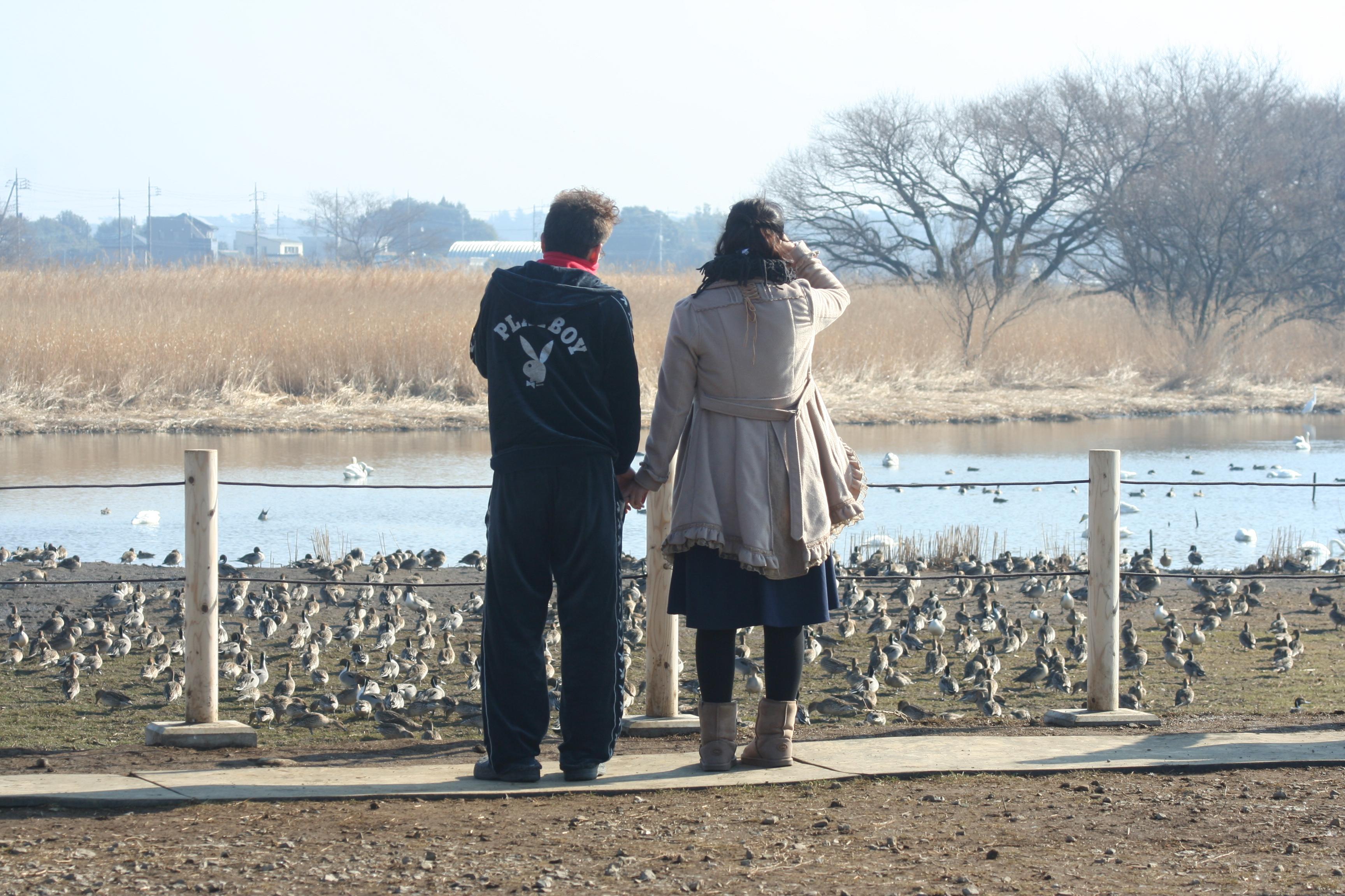 白鳥を観るカップル