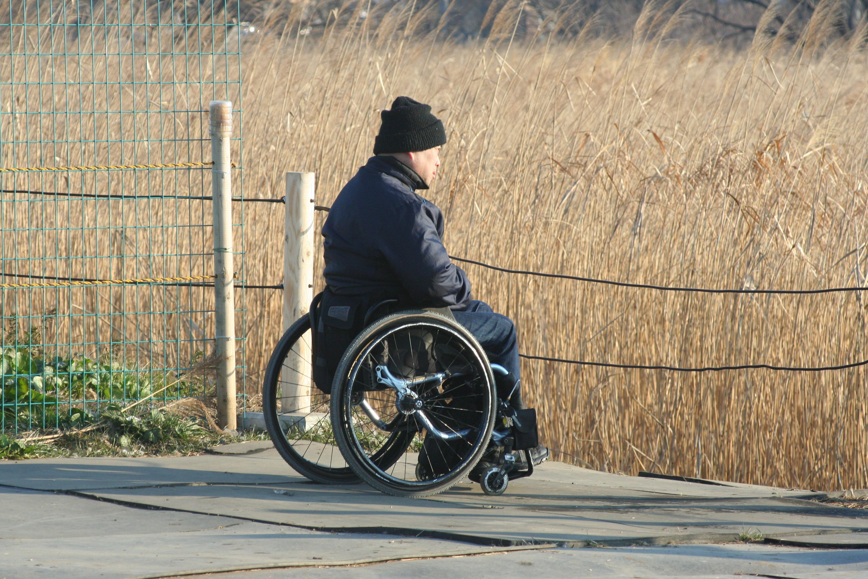かもを観る車椅子