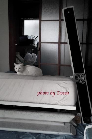 DSC_0894白猫