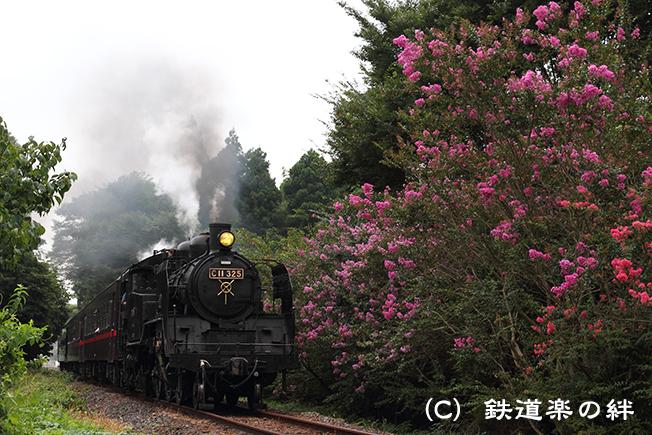 20100821多田羅