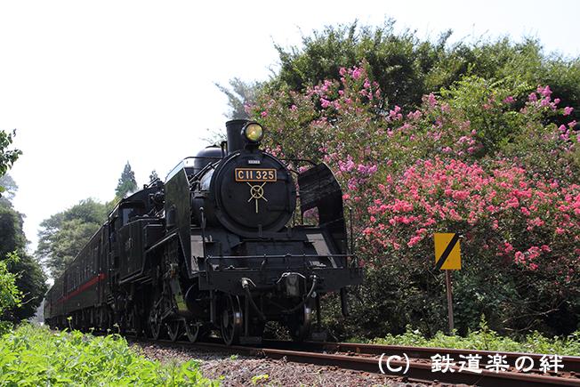 20100828多田羅