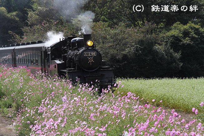 20101003多田羅