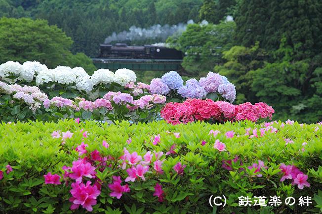 20110528咲花5D2