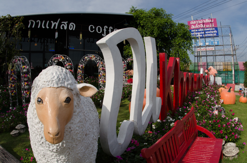 khonyok sheep farm-0496