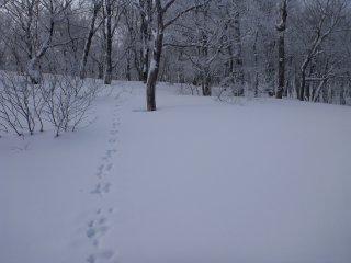 s03ウサギの足跡