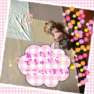 image12153.jpg