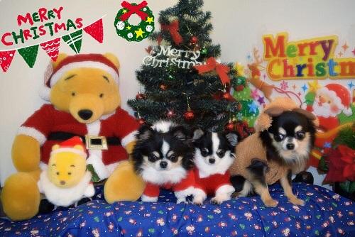 IMG_40822015年クリスマス