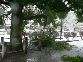 雪くすのき16-4
