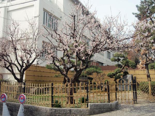 桜咲く 城山町1