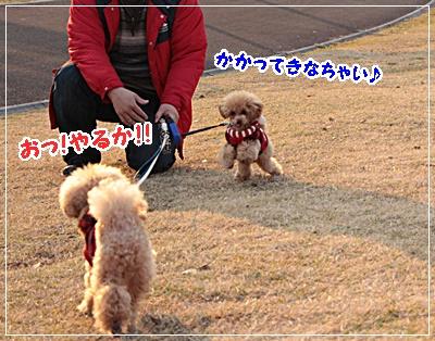 IMG_9627 (2)
