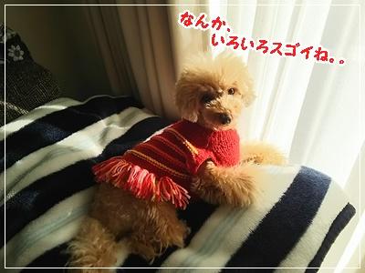 DSC_2427.jpg