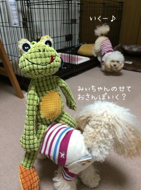 2015.12.13 ココみぃちゃんを乗せる練習