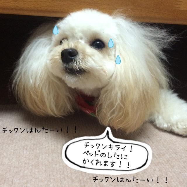 ココモコ Merry Christmas 2015 ~プレゼントがたくさん♪~4