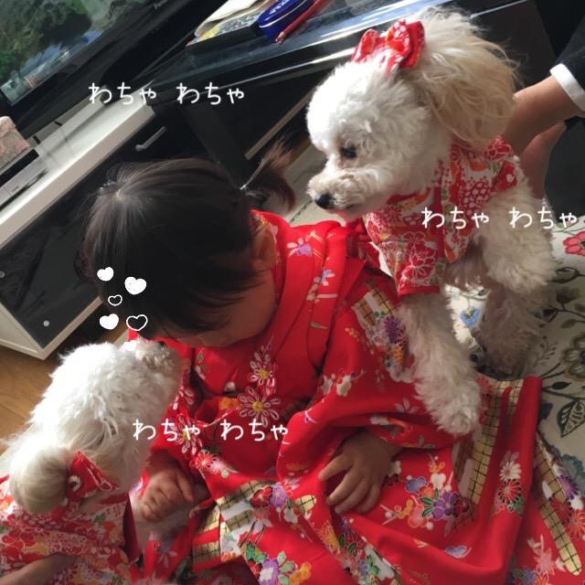 2016.1.1 みぃちゃんとココモコ3