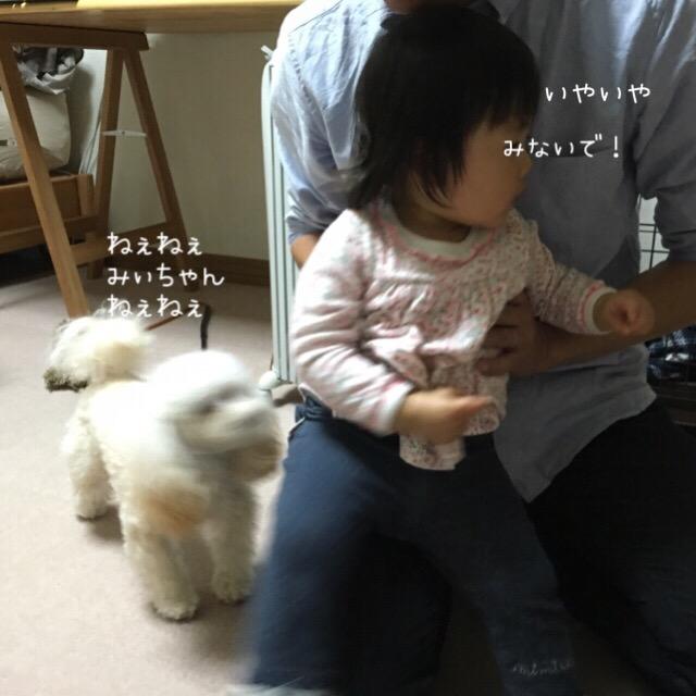 2016.1.1 みぃちゃんとココモコ1