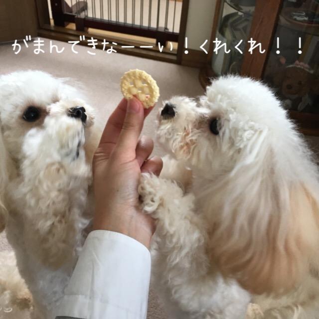 2016.1.4 ココモコのオヤツ1