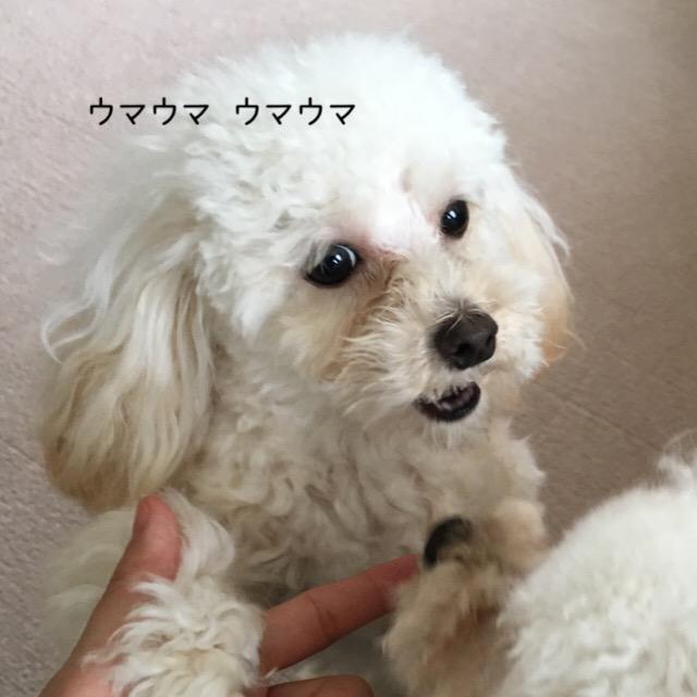 2016.1.4 ココモコのオヤツ4