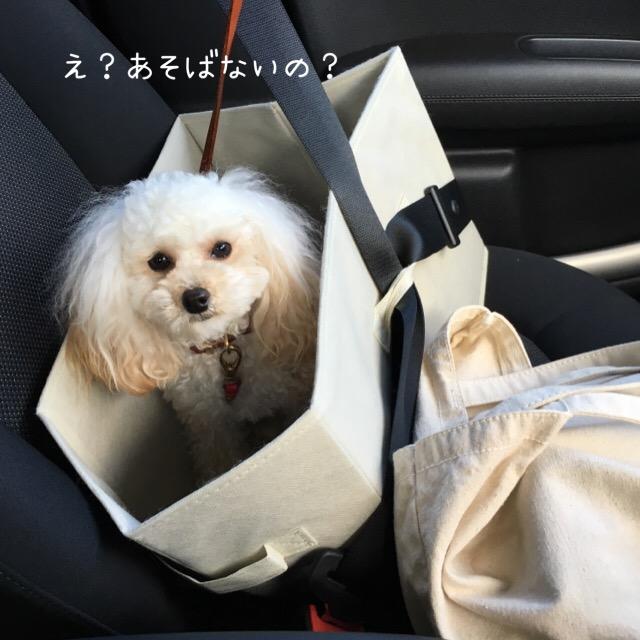 2016.1.14ココ ウエルさん臨時休業