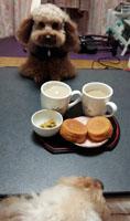 お茶は事務所で3