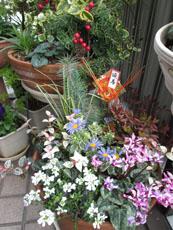 寄せ植え迎春