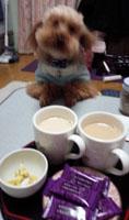 騒々茶の時間2