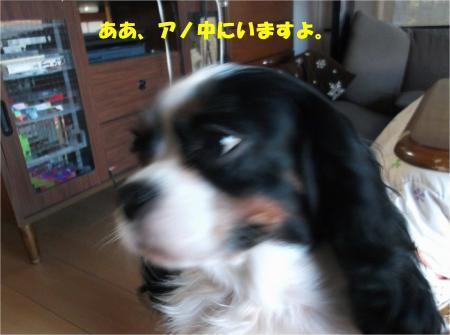 03_convert_20151127183042.jpg