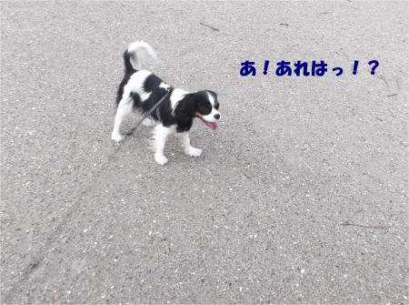 03_convert_20151208184241.jpg