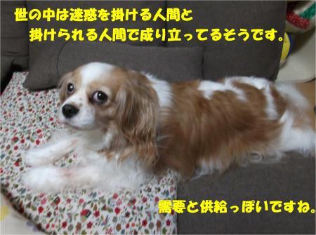 05_convert_20160202183324.jpg