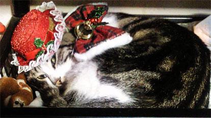クリスマス・コスプレ猫
