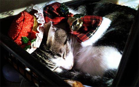 クリスマス猫の寝顔