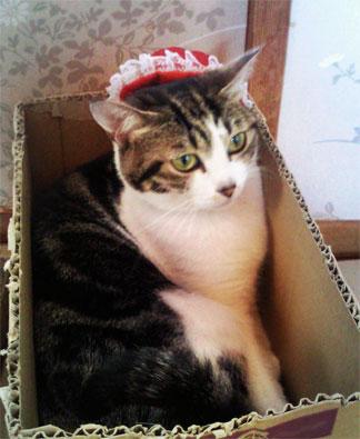 赤い帽子のネコ