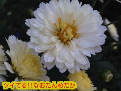 2015103119381976c.jpeg