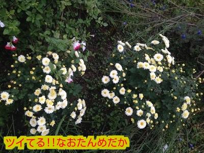 20151101191234059.jpeg