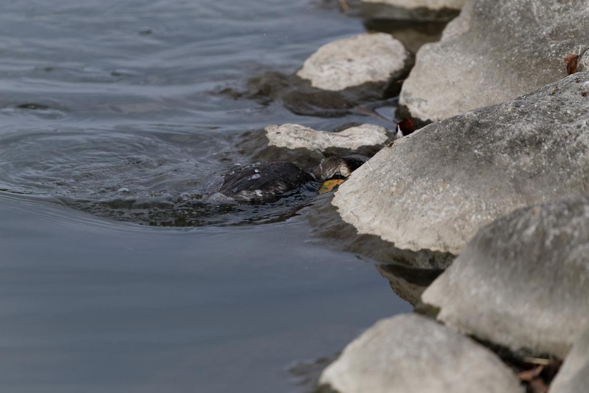 hajirokaitubiri014.jpg