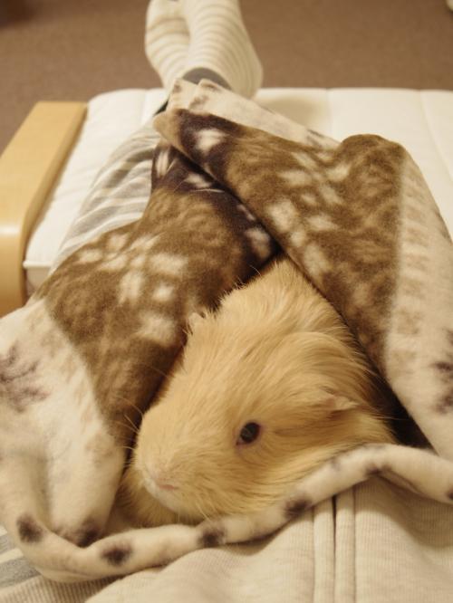 今年の毛布3